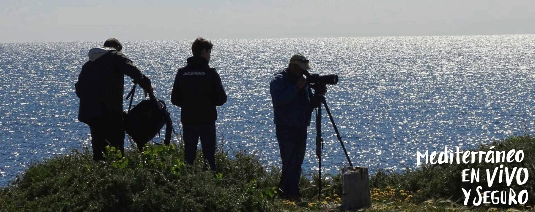 Birding in the Region of Valencia - Tabarca